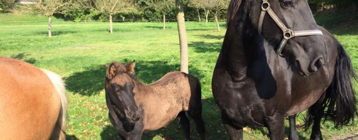 Open Dag Paardenmelkerij de Lage Wierde