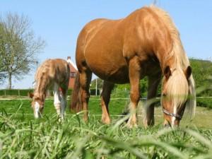 paardenmelk-cosmetics